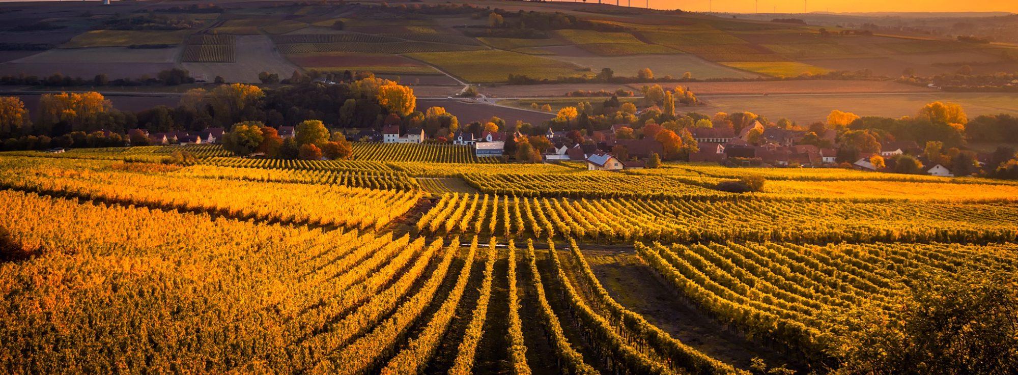 Jack Brice Wine